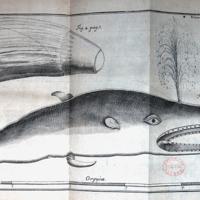 Acta physico-medica Academia Caesareae Leopoldino-Carolinae Naturae Curiosorum