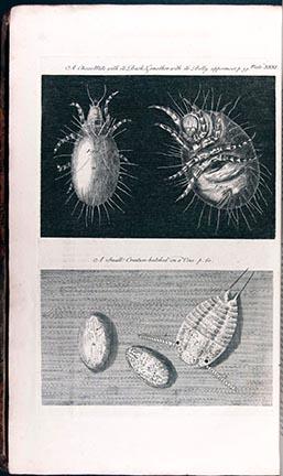 Micrographia Restaurata