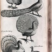 The Ornithology of Francis Willughby