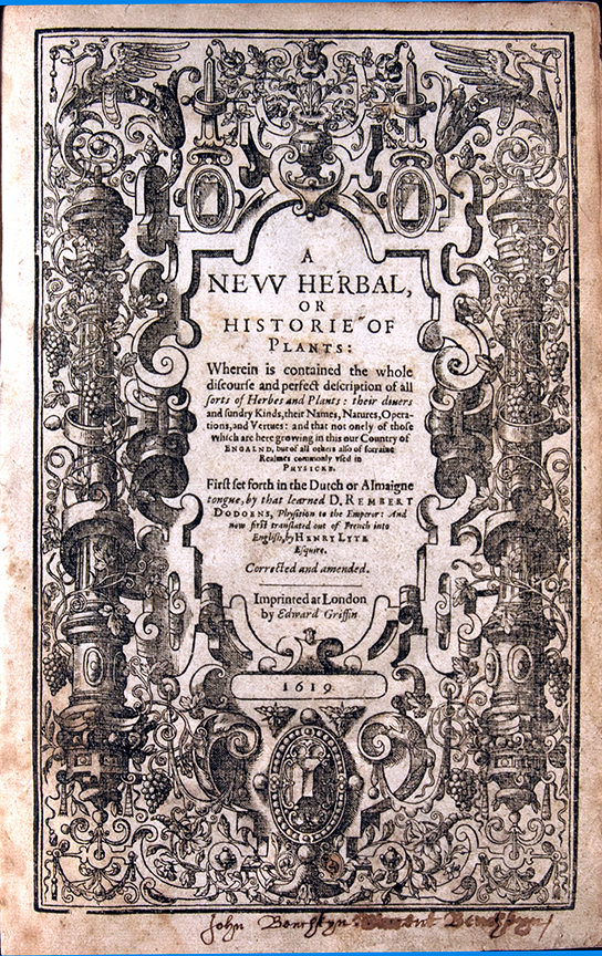 A Nievve Herball, or, Historie of Plantes