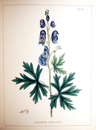 Illustrations of Medical Botany