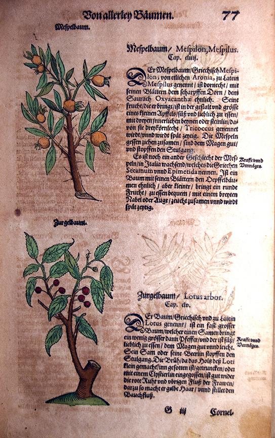 Kräuterbuch des uralten unnd in aller Welt berühmtesten griechischen Scribenten Pedacii Dioscoridis…