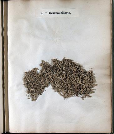 Lichens de France