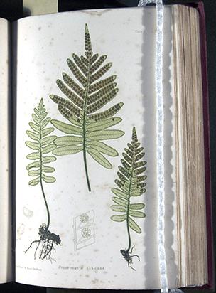 The Octavo Nature Printed British Ferns