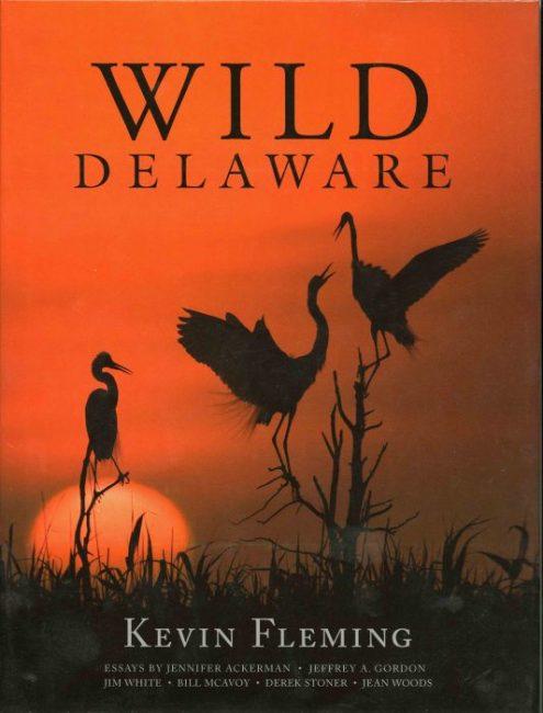 Wild Delaware