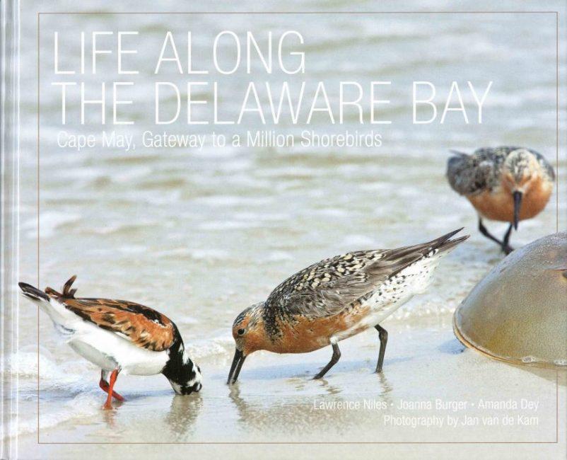Life along the Delaware Bay: Cape May, gateway to a million shorebirds