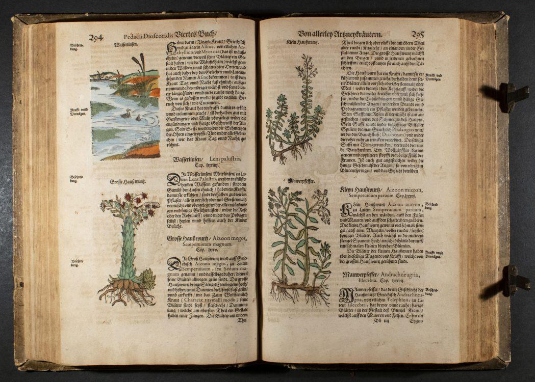 Krauterbuch. Gedruckt zu Frankfurt am Mayn: Durch Erasinum Kempffern, Verlegung Conrad Corthoys, 1614.