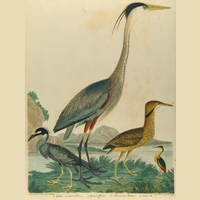 The Animal Kingdom: Six Centuries of Zoological Illustration (Archived)