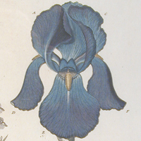 The Art of Botanical Illustration (Archived)